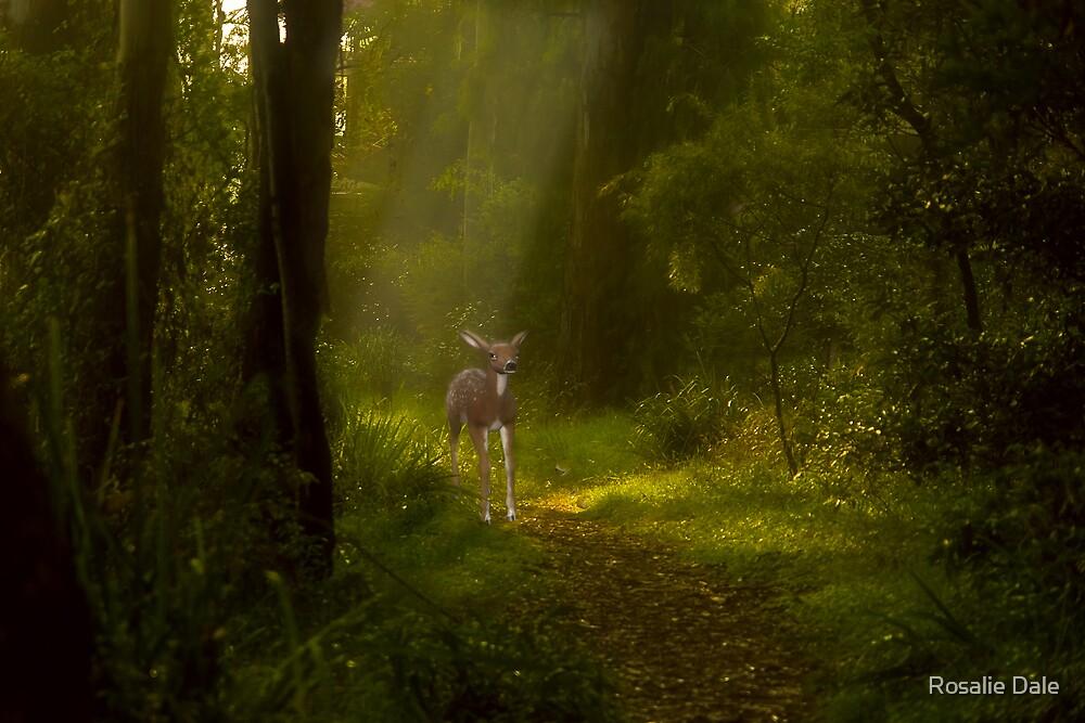 Bambi's visit by Rosalie Dale