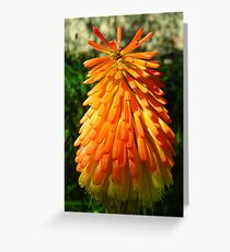 """Red Hot Poker"" Greeting Card"