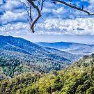 View from Binna Burra, Australia by Kim Austin