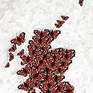 Scotland in Peacocks by OmandOriginal