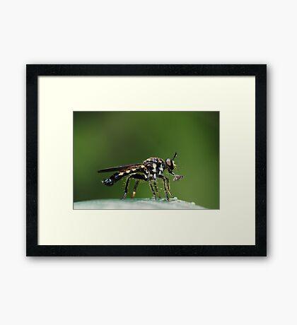 Skewered Framed Print