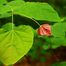 Red Leaf by Richard G Witham