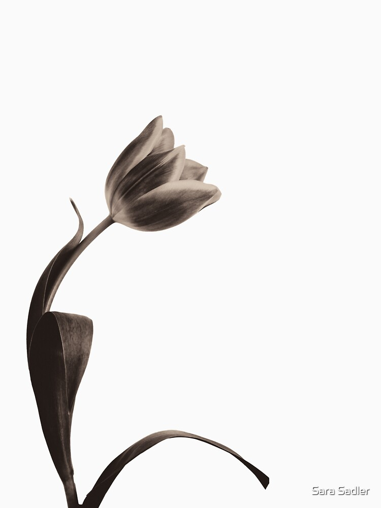 Antique Tulip by sadler2121
