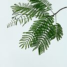 Fronds. by Paul Pasco