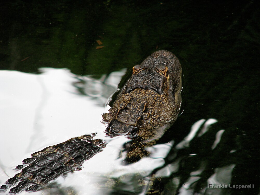 Baby Alligator by Frankie Capparelli