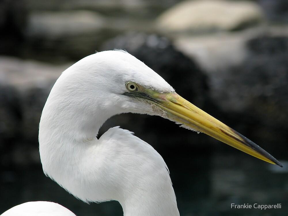 White Bird by Frankie Capparelli