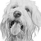 Goldendoodle by BarbBarcikKeith