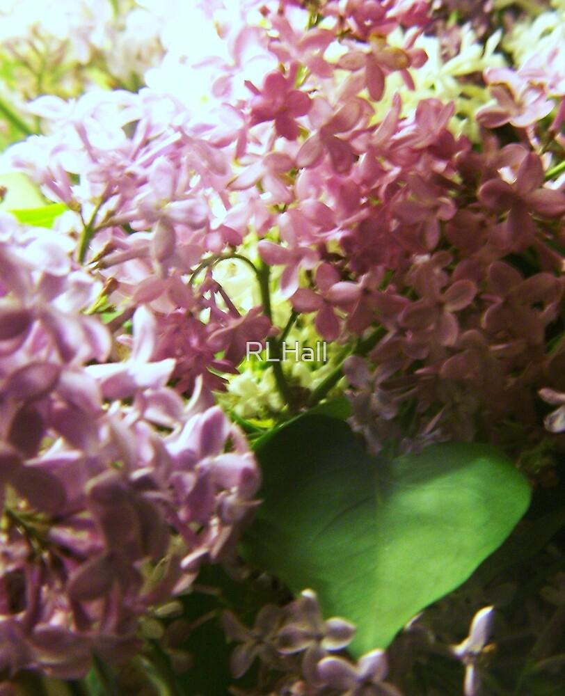 I Love Lilacs by RLHall