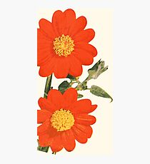 Mexican Sunflower (Summer) Photographic Print