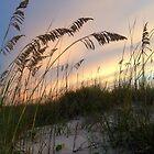 Sunset Sea Breeze by Lindsay Merwin