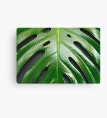 Close-up of the monstera leaf. Abstract background. Canvas Print