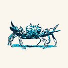 Crab by Dan Tabata