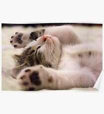 Cat with closed eyes Poster