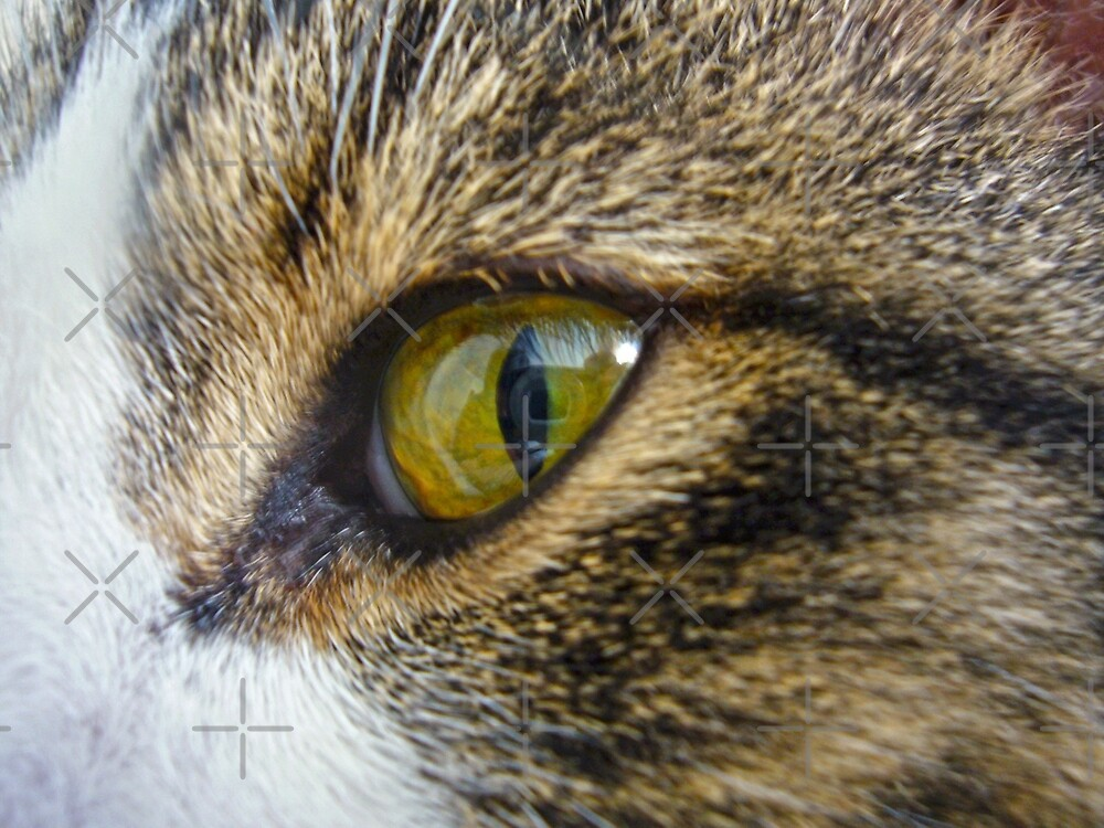 Green Cat Eye by FrankieCat