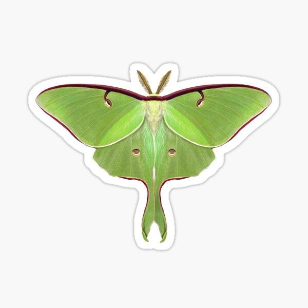 Luna Moth Painting Sticker