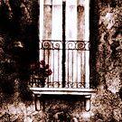 Window... by Elisabete Nascimento