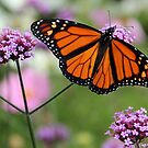 Majestic Monarch by vette