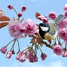 On the Flowering Cherry Blossom by Morag Bates