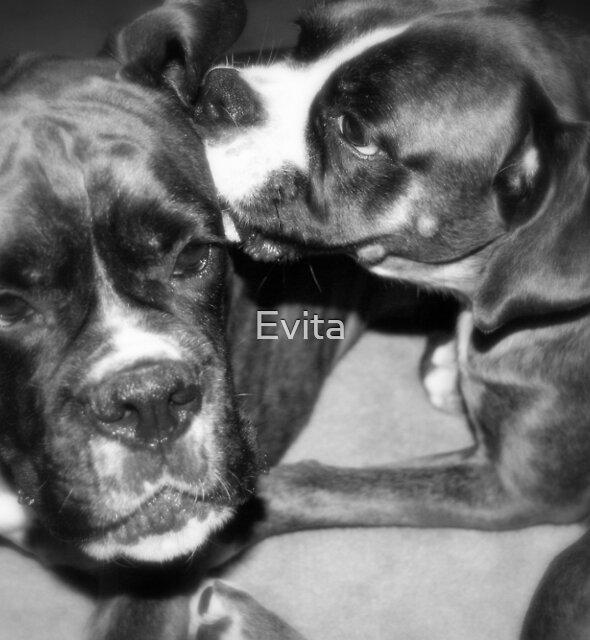 Grooming by Evita