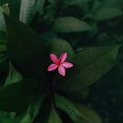 Pink Tropical Flower by Leah Flores