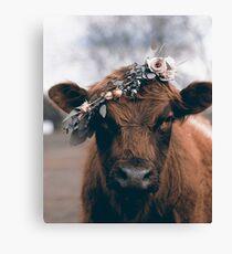 cow crown Canvas Print