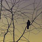 Crow on Tree by azbulutlu