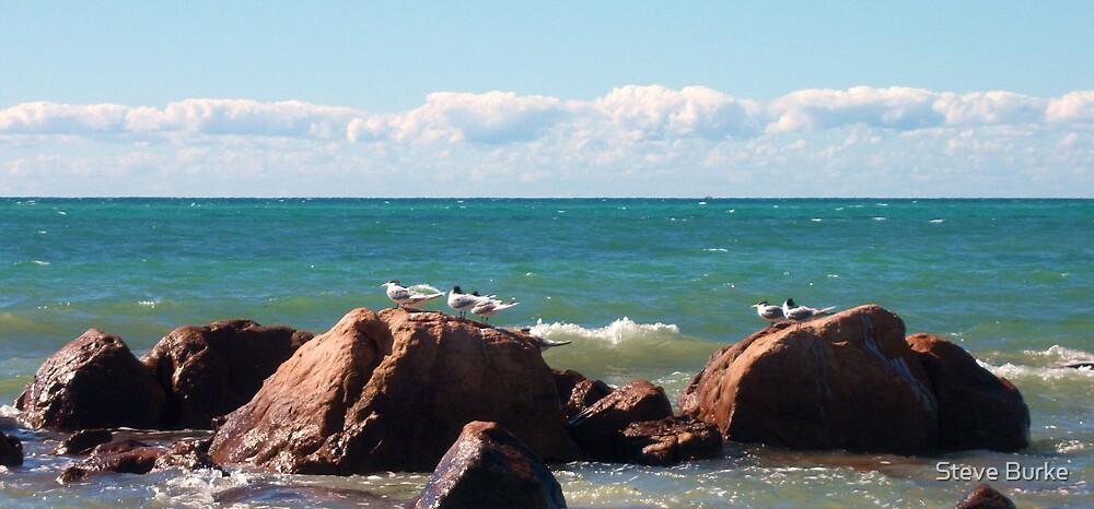 Seagulls by Steve Burke