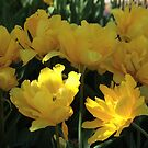 Sunshine Yellow by Donna Sherwood