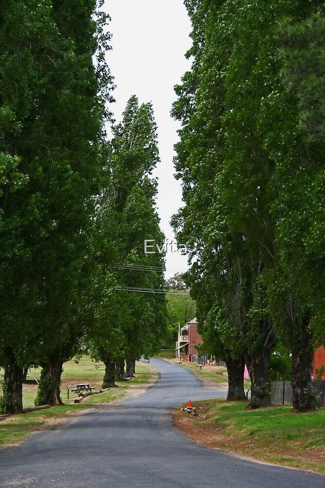 The Avenue by Evita