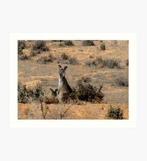 """Watercoloured""  kangaroos Art Print"