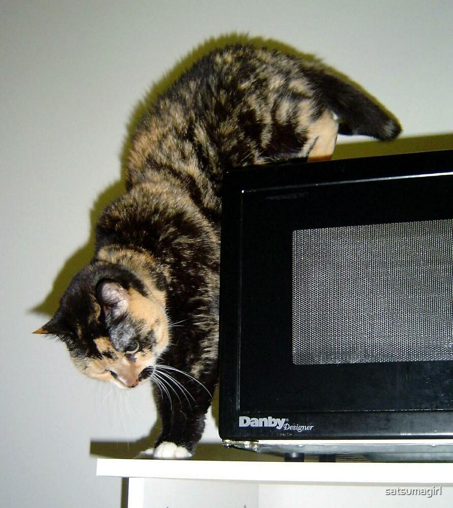 Cat explores by satsumagirl