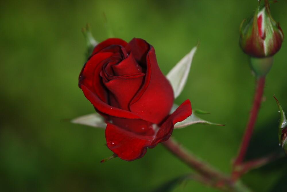 red by Princessbren2006