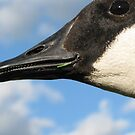 Goose Teeth for NP ;-) by Danielle Loscig