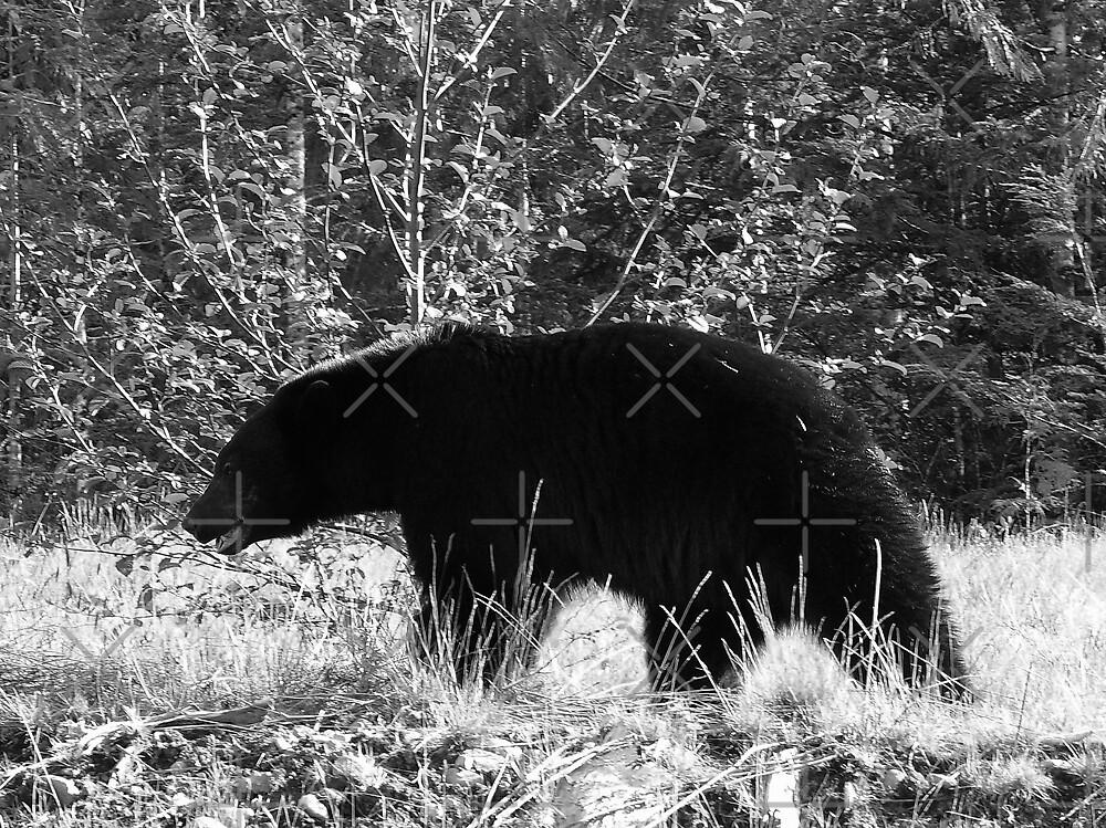 Mr. Bear II by Gail Bridger