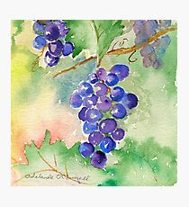 Water color grape vines by Adelaide O'Connell Photographic Print