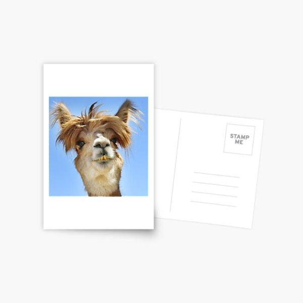 Alpaca with Crazy Hair Postcard