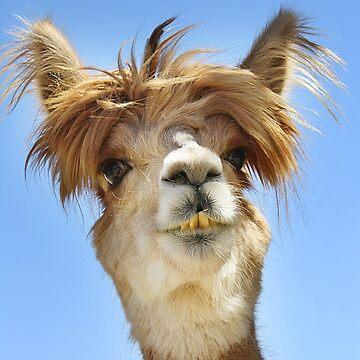 Alpaca with Crazy Hair by Doty