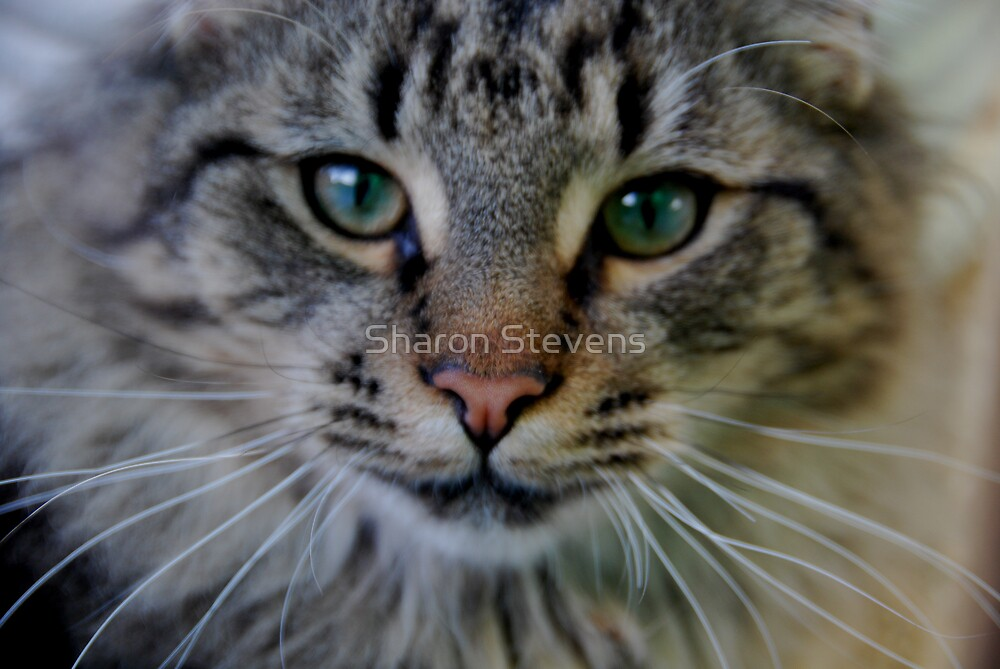 My cat Jebadiah by Sharon Stevens