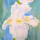 Immortality Iris by Charisse Colbert