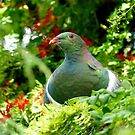 Wood Pigeon - Southland NZ by AndreaEL