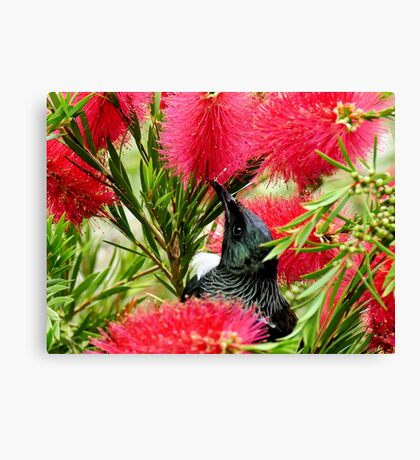 Tui In Botte Brush - NZ Canvas Print