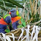 Lorikeets Melbourne - Australia by AndreaEL