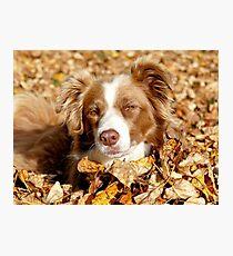 Border Collie - Autumn Leaves Photographic Print