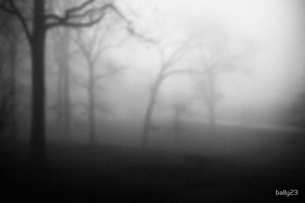 Park Fog by bally23