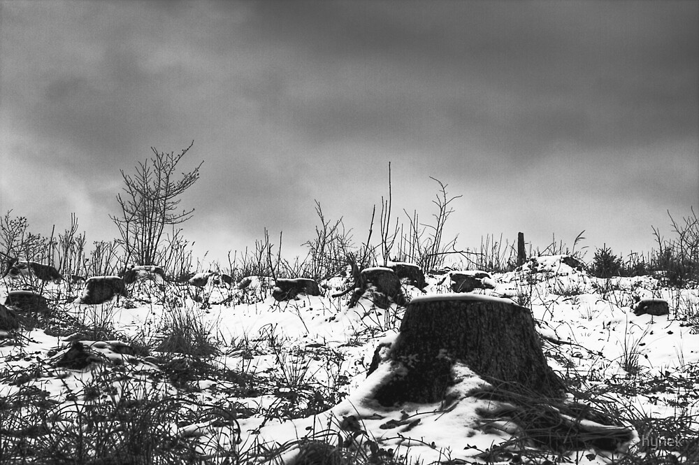 Tree Cemetery by hynek
