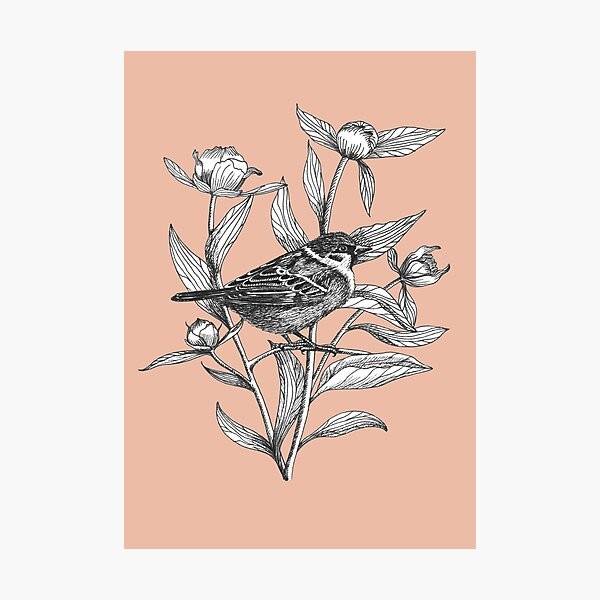 ink sparrow and peonies on terracotta background Photographic Print