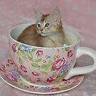 Teacup Kitten! by sarahnewton