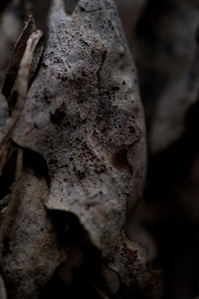 Winter Leaf by John Narun