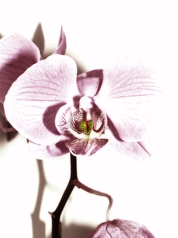 Orchid by YoUnroe