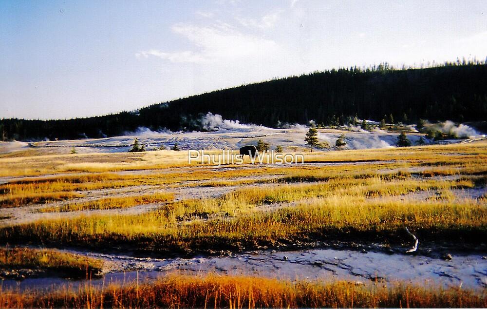 Yellowstone Vista by Phyllis Wilson